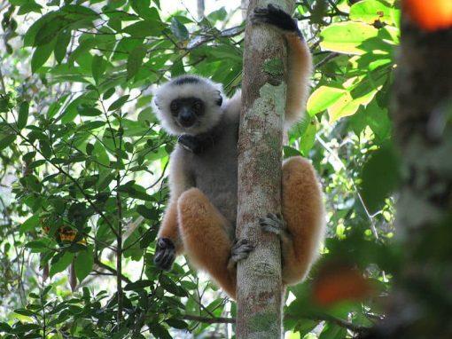 Parc national d'Andasibe-Mantadia