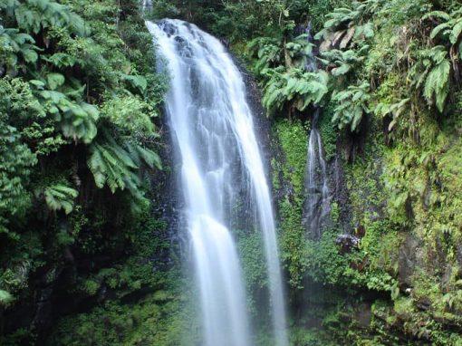 Parc National de la Montagne d'Ambre