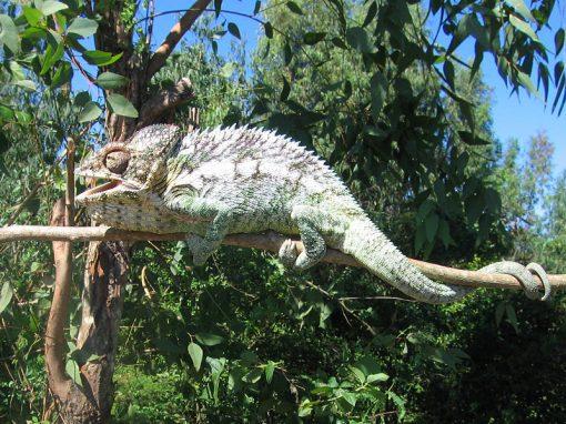 Parc national de Midongy du Sud