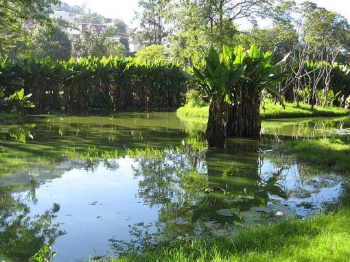 Parc botanique et zoologique de Tsimbazaza