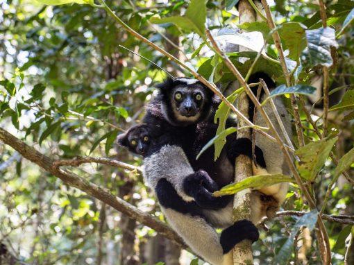 Parc National Mananara-Nord