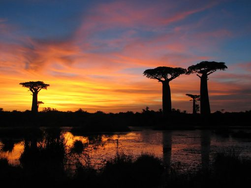 Parc national de Kirindy Mitea