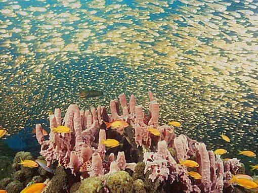 Parc national marin Nosy Hara