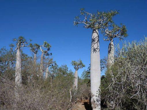 Parc national de Tsimanampetsotsa